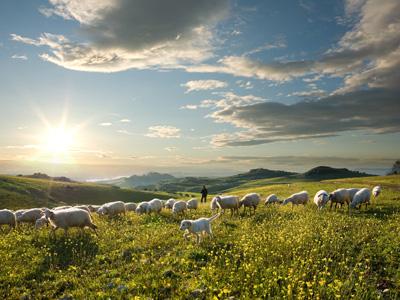 Christelijke e-card Herder; Schapen