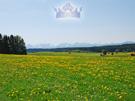 Christelijke e-card: Offenbarung 2:10b
