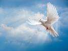 Christelijke e-card: John 14:27